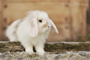 Rabbit baby - 6 by Pebels