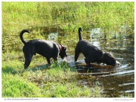 Paddling Pups by In-the-picture