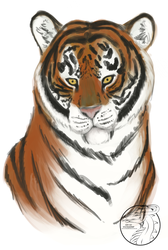 Tiger Portrait by stevie12397