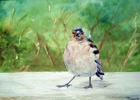 Chaffinch from Tatra Mountains by tomoyo696