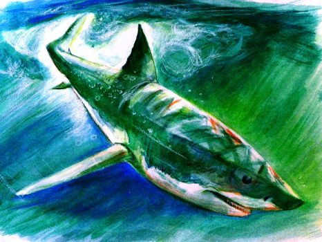 Great White in Watercolor by philippeL