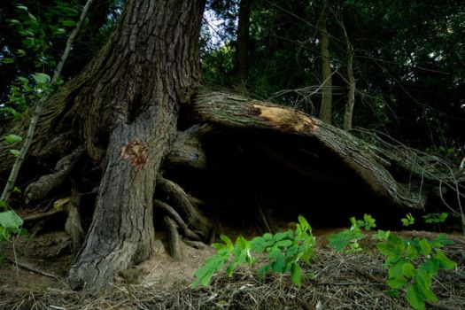 under the tree roots by eyefeather-stock