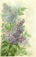 Loving Lilac Greetings by Yesterdays-Paper
