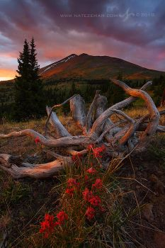 Twisted Sunset II by Nate-Zeman