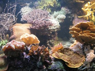 Coral Reef shot 1 by Sunspot01