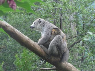 Lemur Mum with Baby by astateofconfusion