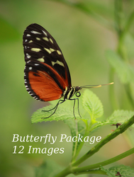 Butterfly Package by bookscorpion
