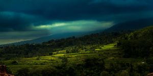 Rice field sun rays by philipbrunner