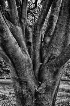Yellowwood Trunk by cedarlili