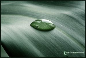 Water Drop on the Leaf 1 by OrangeRoom