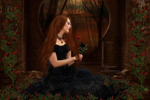 The rose by annemaria48