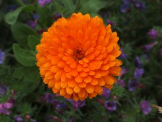Orange Flower by tinytreasures