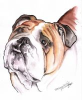 2010-01-18.-.Dog.Portrait by TheHOINK