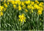 Spring is Here by shutterlight