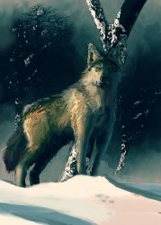 097 Wolf by MarkWester