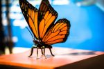 Butterfly|Toy by Dc-Creative