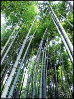 Wind in the Bamboo trees.. by Eclipseo