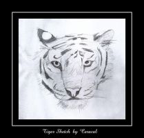 Tiger Sketch by caracal