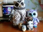 Owls Family by NeonVioletOwl