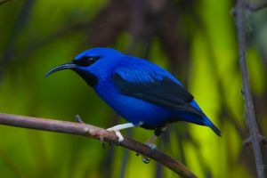Honeycreeper by secondclaw