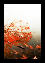 Red leaves by nico-blue