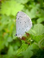 Small Blue by Iris-cup