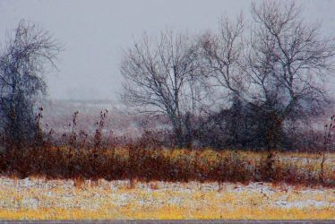 Fields of Wild Fire and Ice by MadGardens