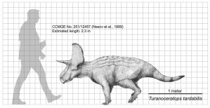 Turanoceratops tardabilis Size Chart by Paleocolour