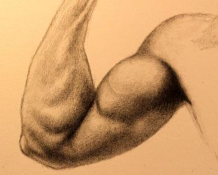 Bicep Study - Sketch by DeLumine