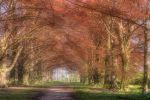 Beech Avenue by houselightgallery