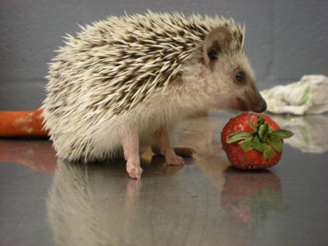 Sonic and his Strawberry by starbuxx