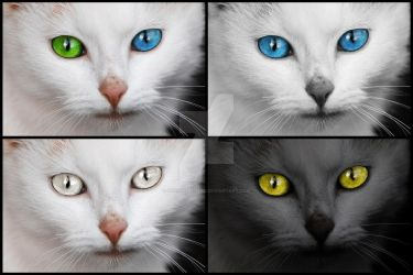 Mesmerizing Cat Eyes - Exclusive Stock Pack by boldfrontiers