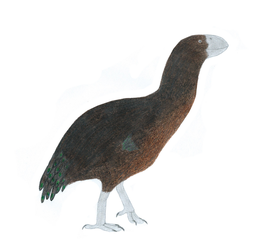 Noble Megapode by Cefal27