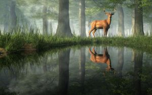 White Tailed Deer Reflected by deskridge