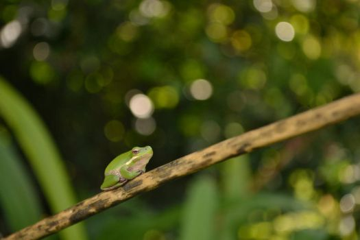 Frog#3 by TheUndyingLands