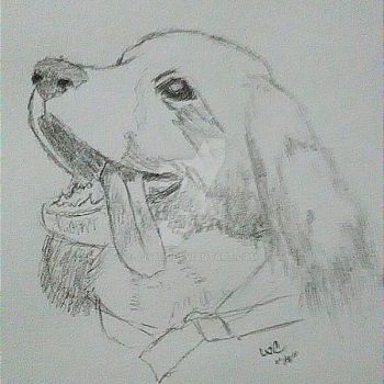 Sketch of a young dog! by jj48bf