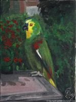 parrot - Cocco by Wolf-Spirit89