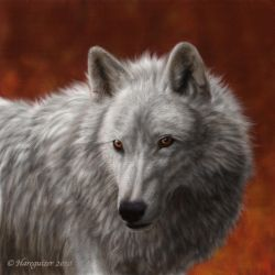 White Wolf by Hareguizer