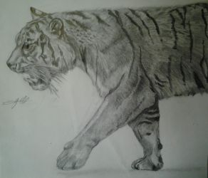 Bengal Tiger by Defiant2Death