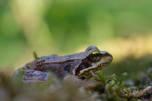 Froggy day by coloridas-aves