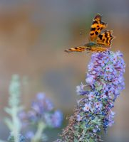 Comma by SarahharaS1