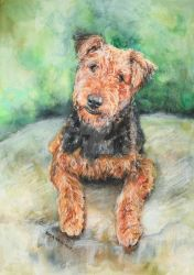 Airedale Terrier by smartisgirl