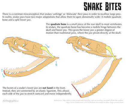 Science Fact Friday: Snake Jaws by Alithographica