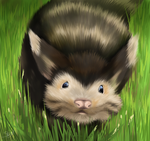 A wild furret appears by Viscohrdyia