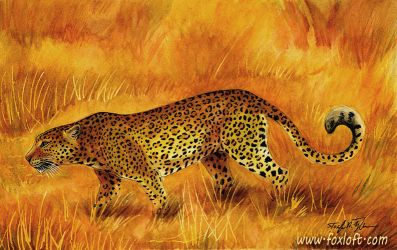 Leopard Sunset by Foxfeather248