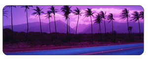 F2u purple palmtrees by Evan-escence