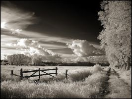 Farm Track infrared... by MichiLauke