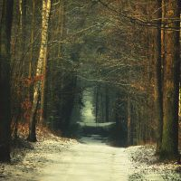 November Forest by Justine1985