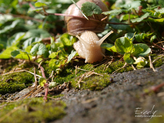Snail by Eveely