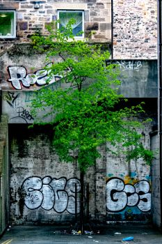 Spring Graffiti by MikeHeard